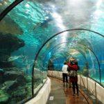 All'acquario di Barcellona si possono ammirare oltre 11 mila pesci