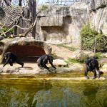 El Zoo Barcelona: alla scoperta degli oltre 7 mila animali