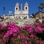 Le azalee di Roma impreziosiscono la scalinata di Trinità dei Monti