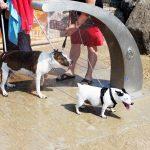 A mare con Fido: a Barcellona ci sono le doggy beach
