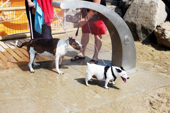 Barcellona beach for dogs