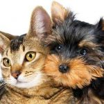 L'Italia ha scoperto il valore del turismo pet-friendly