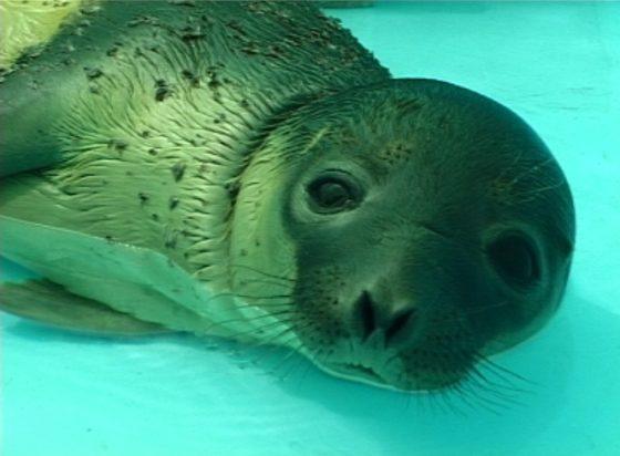 Aula del Mar foca