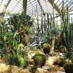 Francoforte: da vedere il Palmengarten paradiso del regno vegetale