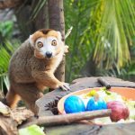 Cosa vedere a Lipsia: il meraviglioso Zoo Leipzig