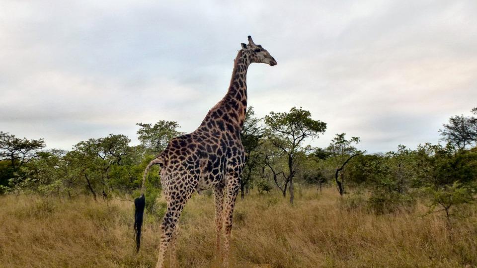I 4 migliori safari in italia europa nel mondo for Tassa di soggiorno londra