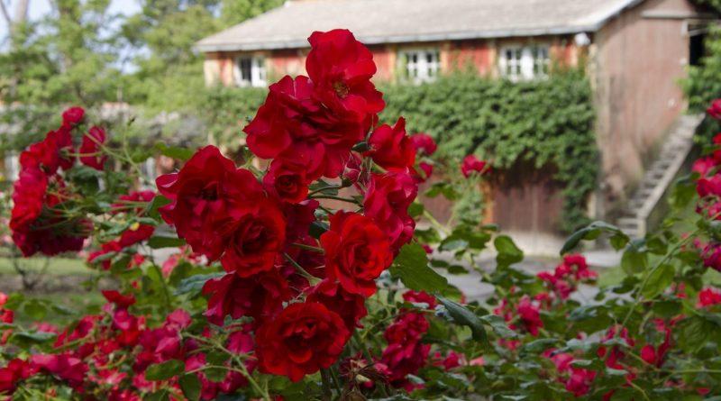 Euroflora Roseto a Nervi