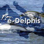 Operazione Delphis per proteggere i delfini e le balenottere del Mediterraneo