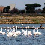 Tarquinia 10 km del Mare: il 7 ottobre al Lido la gara podistica