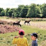 Richmond Park Londra: alla scoperta di un'oasi nascosta