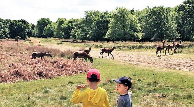 Richmond Park Londra