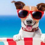 Il passaporto europeo per gli animali da compagnia: come richiederlo