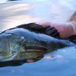 Esame di pesca a Bolzano: diplomati 154 nuovi pescatori