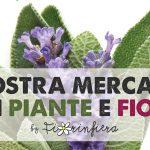 Il 6 e 7 Giugno a Borgo San Lorenzo la Mostra Mercato di fiori e piante