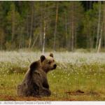 Inseguimento all'orsa sulla montagna di Mortaso