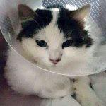 Salvata e adottata una gattina investita durante l'emergenza meteo a Livorno