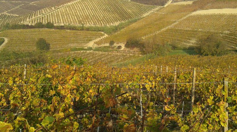 vino Monferrato ph pixabay