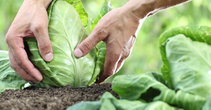 agricoltura sostenibile - ph Regione Puglia