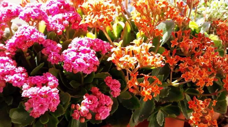 fiori - ph regione toscana