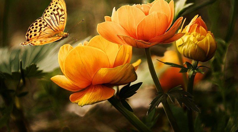 i fiori del galateo Alessia Scotto